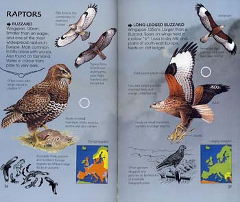 Birds of Prey - Usborne Spotter's Guide (Paperback)